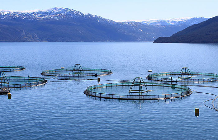 aquaculture farm - insects for human consumption